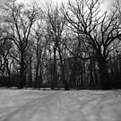 Snow in Black and White by Kendra Kantor