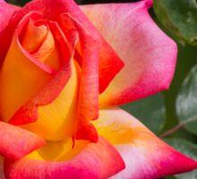 roses in the garden Sticker