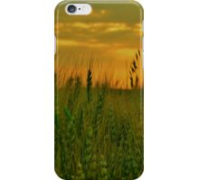 Young Wheat at Sunset iPhone Case/Skin