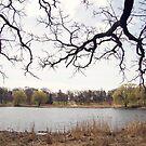 Pond by Kendra Kantor
