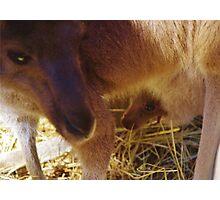 Joey and Mum Photographic Print