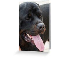 labrador retrive Greeting Card