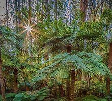 Sunlit Glade, Marysville, Victoria by Pauline Tims