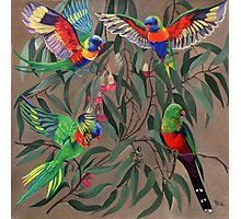 Birds from Paradise. Rosellas Photographic Print