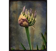 Spring Will Come Again Photographic Print
