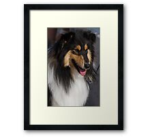 cute lessie dog Framed Print