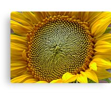 Sunflower - Up Close Canvas Print