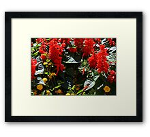 Red flowers texture Framed Print