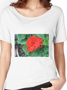 Red flower in the pot with many green leaves Women's Relaxed Fit T-Shirt
