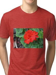 Red flower in the pot with many green leaves Tri-blend T-Shirt
