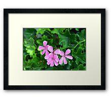 Pink flowers on green leaves background Framed Print
