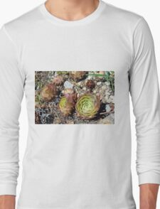 Succulents in the park Long Sleeve T-Shirt