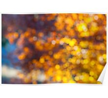 Abstract light through tree leaves Poster