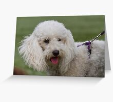 cute dog Greeting Card