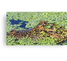 Baby gator in camouflage Canvas Print