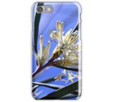 Hakea in Sunshine iPhone Case/Skin