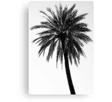 A palm tree in the sun  Canvas Print