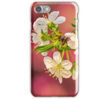 flowers of apple tree on a bulr background iPhone Case/Skin