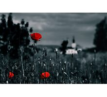 big fresh poppies in the field Photographic Print