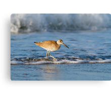 Willet in the Waves Canvas Print