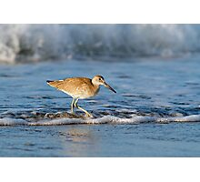 Willet in the Waves Photographic Print