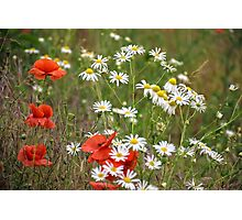 poppy and daisy flowers background Photographic Print