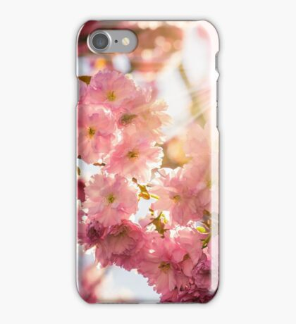 pink blossomed sakura flowers iPhone Case/Skin