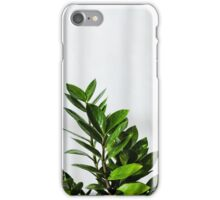 Bold green leaves of plant Zamioculcas  iPhone Case/Skin