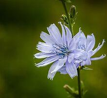 Blue Sailor by PhotosByHealy