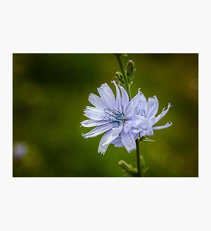 Blue Sailor Photographic Print