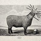 CORDEROS DEGOLLADOS (slaughtered lambs) by Alvaro Sánchez