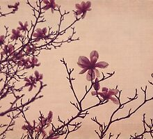 Tree Blossoms 3 by Kadwell