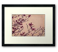 Tree Blossoms 3 Framed Print