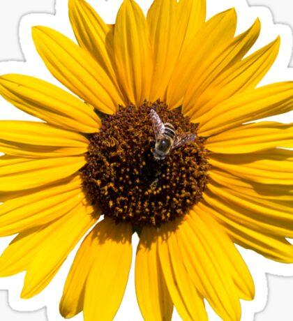 Beautiful Bee on a Sunflower Sticker