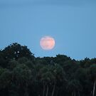 Super Moon August 2014 by kevint