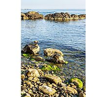stones and seaweed on rocky coast of the sea Photographic Print