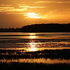 Golden Sunset by kevint