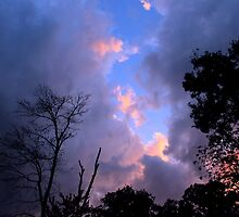 Pink Clouds by NatureGreeting Cards ©ccwri