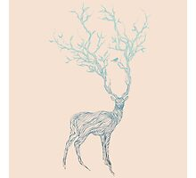 Blue Deer Photographic Print