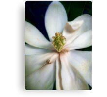 Sweet Bay Magnolia Bloom #2 Canvas Print