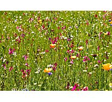 Wild field of flowers Photographic Print