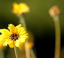 Yellow Flower by Henrik Lehnerer