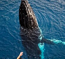 Gimme Five by Norbert Probst