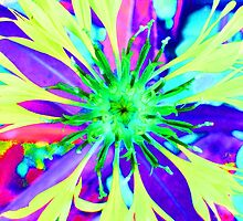 Psychedelic Cornflower by Janice Heppenstall