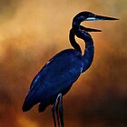 Great Blue Heron by Theresa Campbell