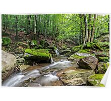 Mountain stream in green forest Poster
