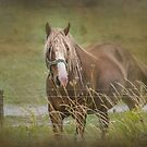 On The Other Side Of The Fence by jules572