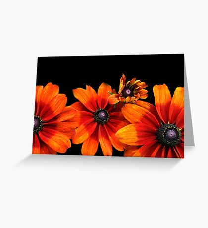 Orange Sunflowers  Greeting Card