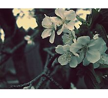 Morning Blossoms Photographic Print
