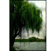 My beautiful weeping willow © Photographic Print
